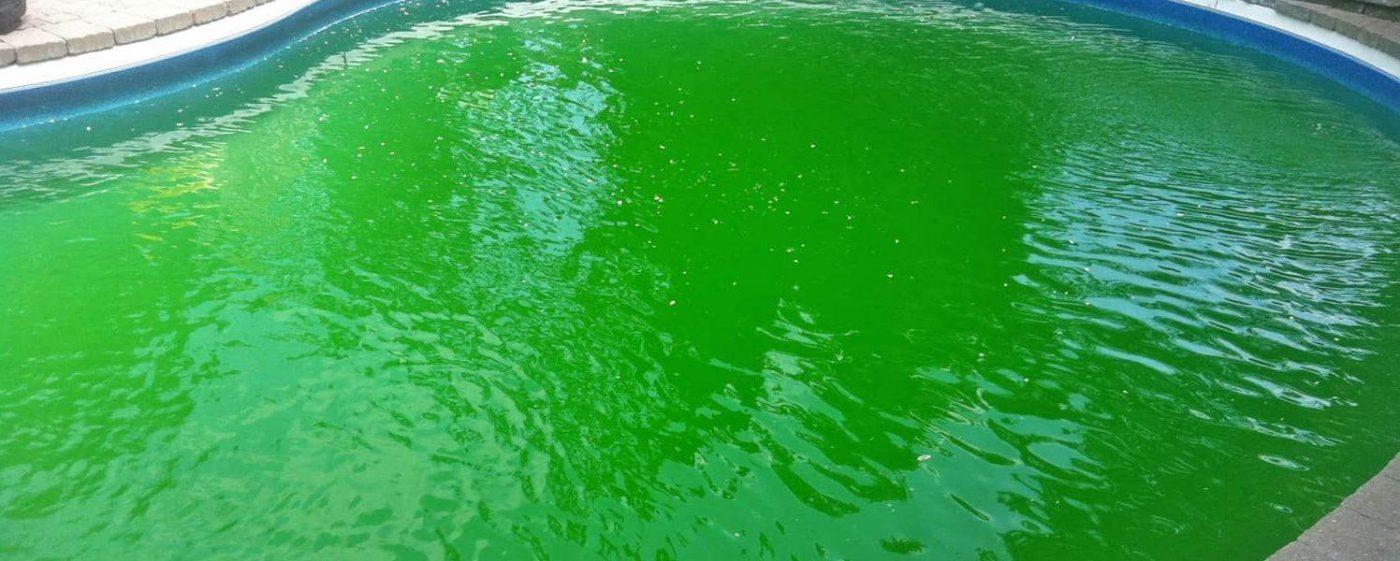 alga medence uszodaesmedence e1555335316817